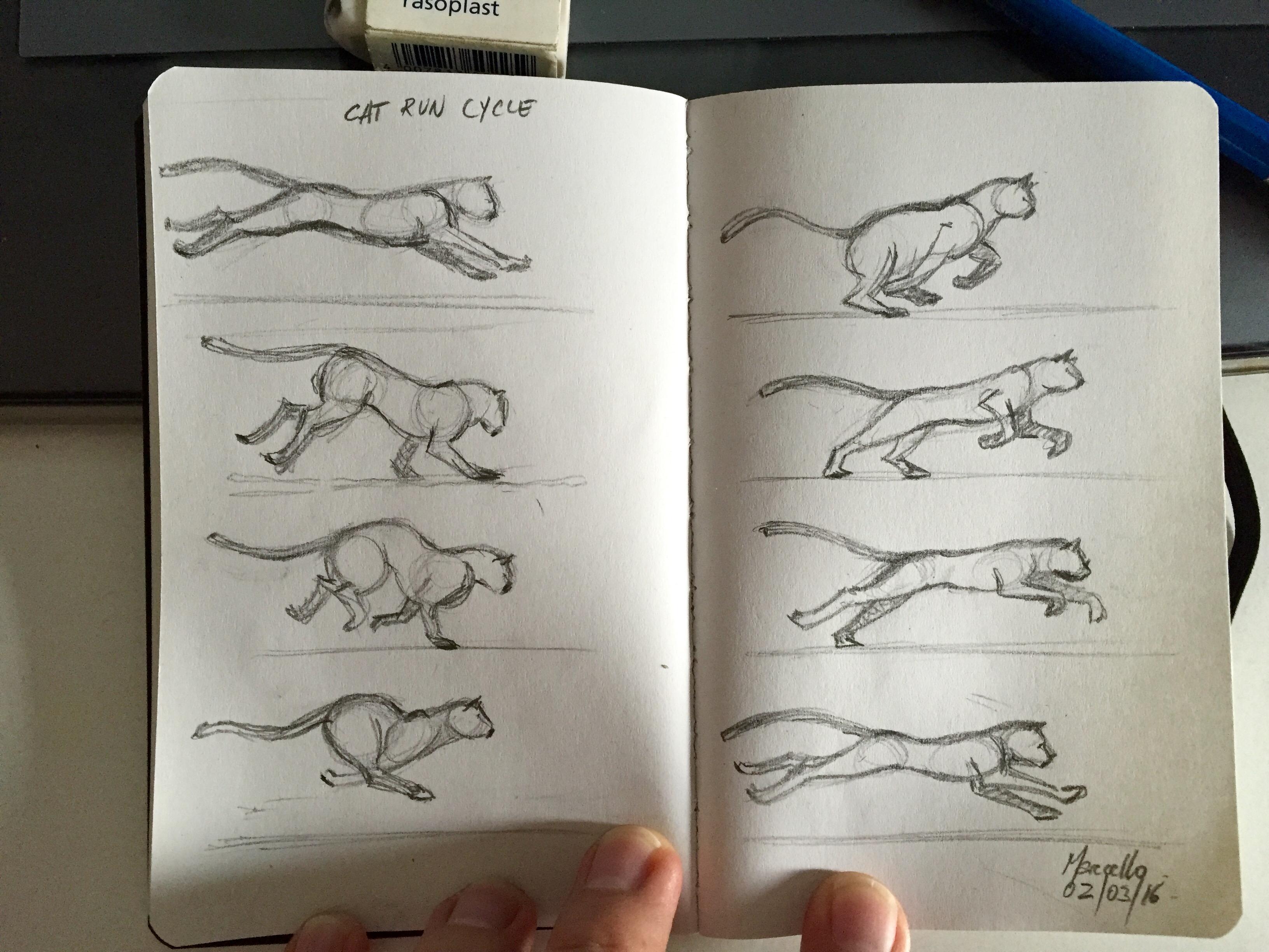 Cat Run Study